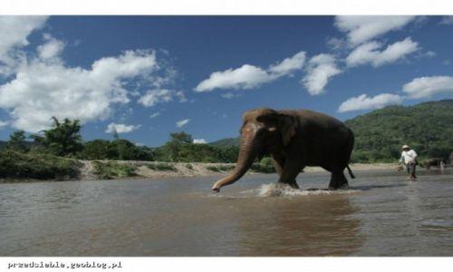 Zdjęcie TAJLANDIA / Chiang Mai / Elephant Nature Park / Elephant Nature Park