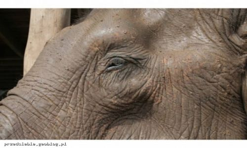 Zdjecie TAJLANDIA / - / Elephant Nature Park / Elephant Nature Park