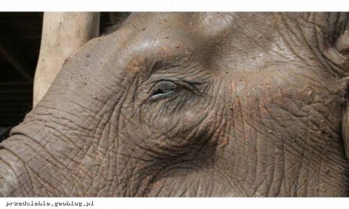 TAJLANDIA / - / Elephant Nature Park / Elephant Nature Park
