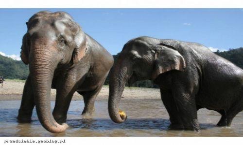 Zdjecie TAJLANDIA / - / Elephant Nature Park / Elephant Nature