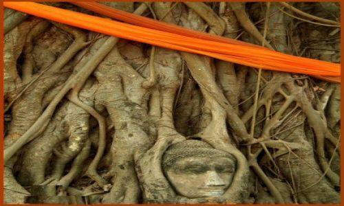Zdjęcie TAJLANDIA / Ayutthaya / Ayutthaya / Święte drzewo