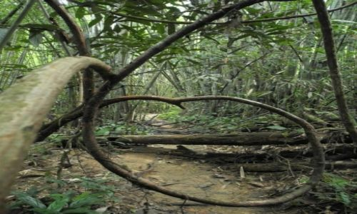 Zdjecie TAJLANDIA / poludnie  / khao sok  / czy to już dżungla