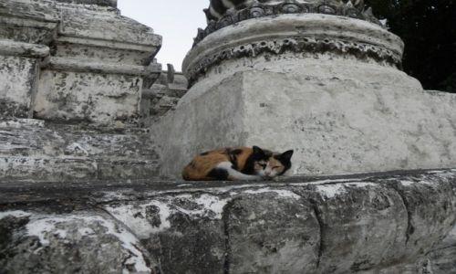 Zdjęcie TAJLANDIA / chiang mai / .. / kotek