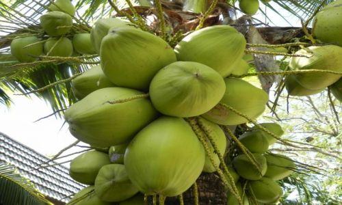 Zdjęcie TAJLANDIA / chiang mai / ,, / kokosowo