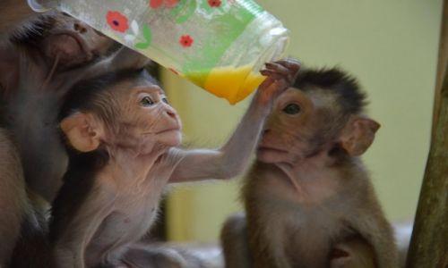 Zdjęcie TAJLANDIA / połódnie / wyspy / Słodkie małpki