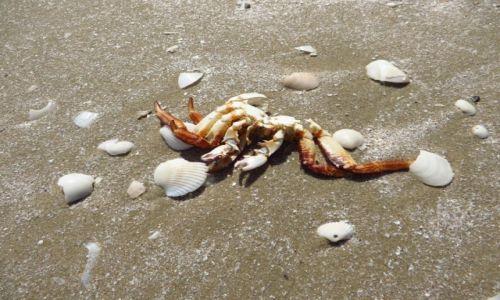 Zdjęcie TAJLANDIA / Zatoka Tajlandzka / Park Narodowy Sam Roi Yod / plaża Laem Sa La