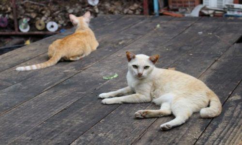Zdjęcie TAJLANDIA / Bangkok / Targ rybny / Na czatach