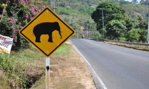 Zdj�cie TAJLANDIA / Prowincja Phuket / Phuket / Informacja to podstawa