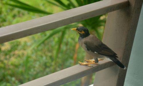 Zdj�cie TAJLANDIA / Phuket / Kata Beach / go�� na balkonie :)