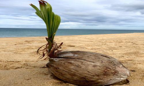 Zdj�cie TAJLANDIA / Phuket / Pla�a / Pora zapu�ci� korzenie?