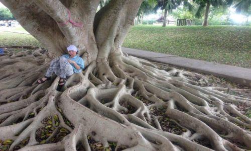 Zdjecie TAJLANDIA / południe / National Park Khao Sok / życie