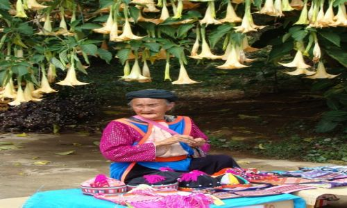 Zdjęcie TAJLANDIA / Złoty Trójkąt / wioska / Datura, czyli bieluń