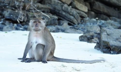 Zdjecie TAJLANDIA / PhiPhi Island / phi / Boss