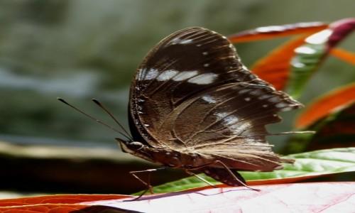 Zdjęcie TAJLANDIA / Krabi / Ko Lanta Yai / Ethope noirei po przejściach
