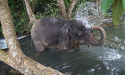 Zdjęcie TAJLANDIA / Krabi / Krabi / Kąpiel słonia