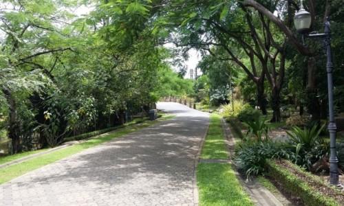 Zdjęcie TAJLANDIA / Bangkok / Chatuchak park / Chatuchak park