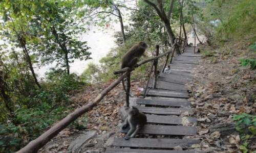 Zdjecie TAJLANDIA / Krabi / Krabi / Lokalna leśna ścieżka