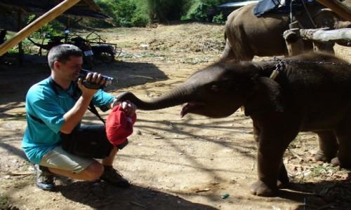 Zdjecie TAJLANDIA / Kanczanaburi / Farma słoni / Kto jest bardzi