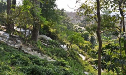 Zdjęcie TAJLANDIA / północ  / na północ od Chiang Mai / A strumyk płynie przez zielony las
