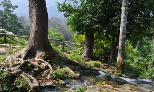 TAJLANDIA / północ  / na północ od Chiang Mai / A strumyk płynie przez zielony las