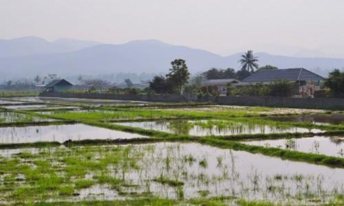 Zdjęcie TAJLANDIA / północ / gdzieś po drodze / Pola ryżowe