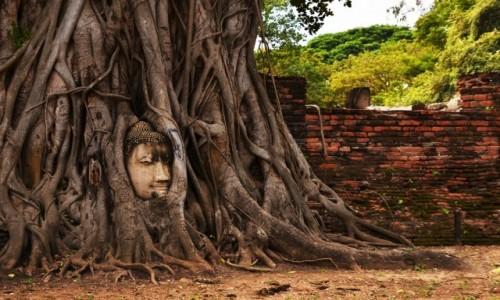 Zdjecie TAJLANDIA / Ayutthaya  / Ayutthaya  / Czardrzewo