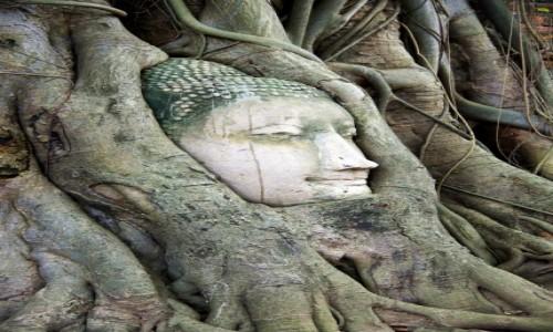Zdjęcie TAJLANDIA / Ayutthaya / Ayutthaya / W objęciach natury.
