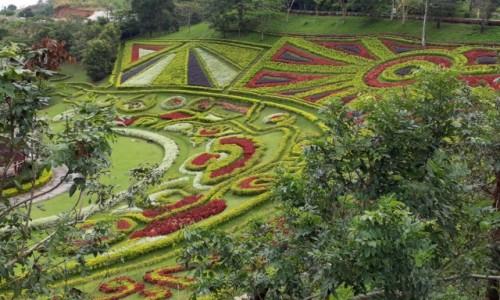 Zdjecie TAJLANDIA / Prowincja Chiang Rai  / Mae Salong  / Ogrody