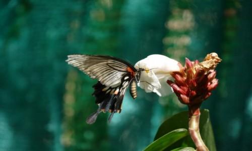 Zdjęcie TAJLANDIA / Krabi / Koh Lanta / W locie