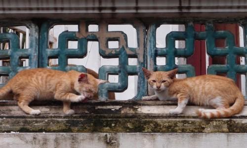TAJLANDIA / Bangkok / Bangkok / Kociaki