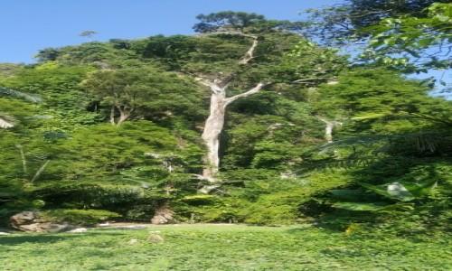 Zdjecie TAJLANDIA / Krabi / Krabi / Big tree