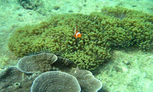 Zdjecie TAJLANDIA / Ko Phi Phi Lay / Maya Bay / Gdzie jest Nemo?
