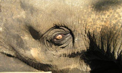 Zdjęcie TAJLANDIA / Ko Chang / słoniarnia / oczko