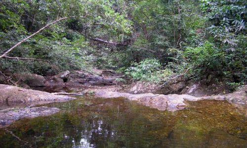Zdjęcie TAJLANDIA / ko chang / las deszczowy / w głębi wyspy