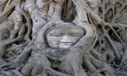 Zdjecie TAJLANDIA / Ajutthaja /  Wat Phra Mahathat / święta głowa