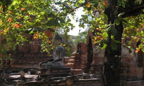 Zdjęcie TAJLANDIA / Ajutthaja /  Wat Phra Mahathat / budda