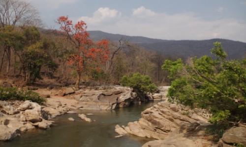 Zdjecie TAJLANDIA / prowincja Chiang Mai / Op Luang National Park / Op Luang National Park