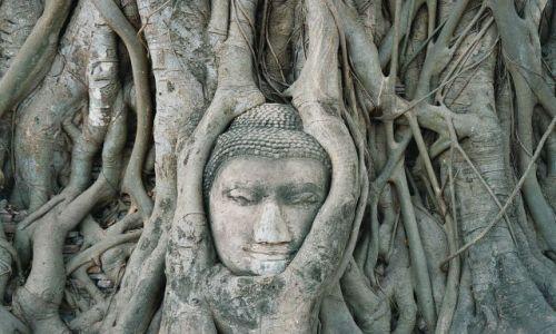 Zdjęcie TAJLANDIA / Ajutthaja / Ajutthaja / Budda