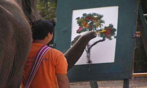 Zdjecie TAJLANDIA / północ Tajlandii / na północ od Chiang Mai / słoń artysta