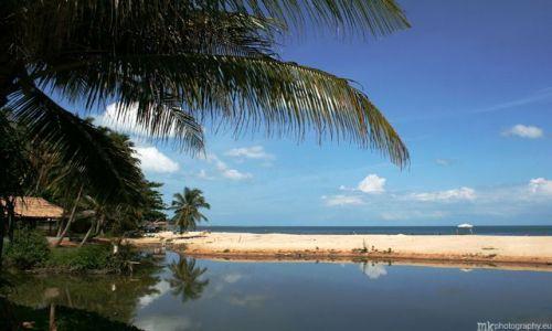 Zdjecie TAJLANDIA / Koh Samui / Lamai beach / palmy
