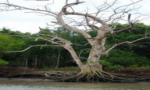 Zdjecie TAJLANDIA / brak / zatokę Phangnga  / Namorzyny