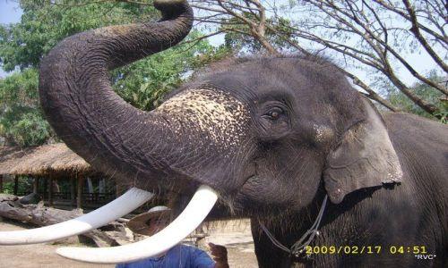 Zdjecie TAJLANDIA / polnoc kraju / chiang mai / slonik