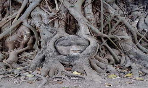 Zdjęcie TAJLANDIA / Ayutthaya / Ayutthaya / Uwieziony Budda