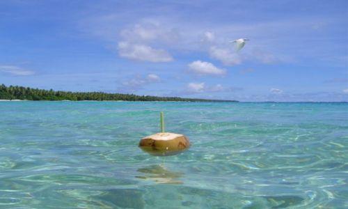 Zdjecie TAJLANDIA / south / island / island NOK
