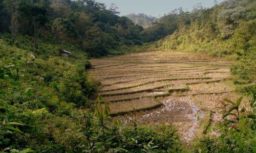 Zdjecie TAJLANDIA / Chang Mai / brak / pole ryżowe w porze suchej