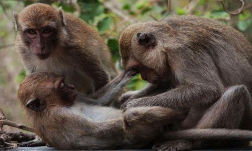 Zdjecie TAJLANDIA / brak / Pattaya / co mi robisz???