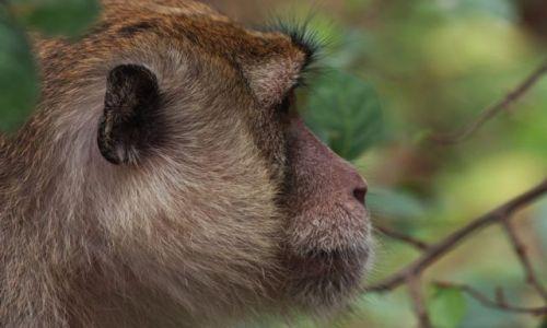 Zdjęcie TAJLANDIA / brak / Pattaya / małpi profil