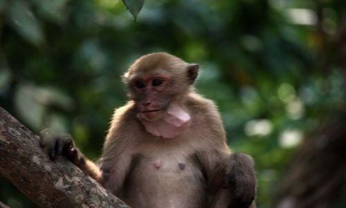 Zdjęcie TAJLANDIA / park Narodowy Erewan / Bangkok / małpio-chomik ???