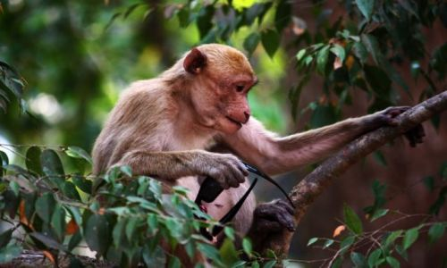 Zdjęcie TAJLANDIA / park narodowy Erewan / Bangkok / plażowiczka..........