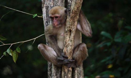 Zdjęcie TAJLANDIA / park narodowy Erewan / Bangkok / bezpieczny punkt obserwacyjny...